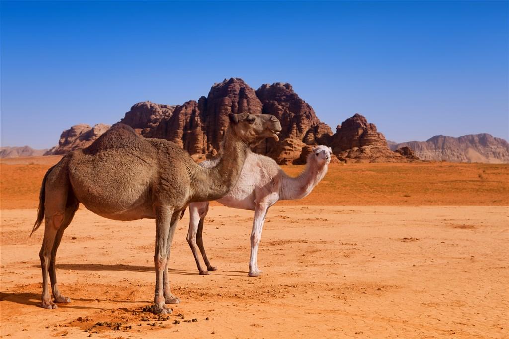 Jordánsko - krajina čarovnej histórie - 10 Popup navigation