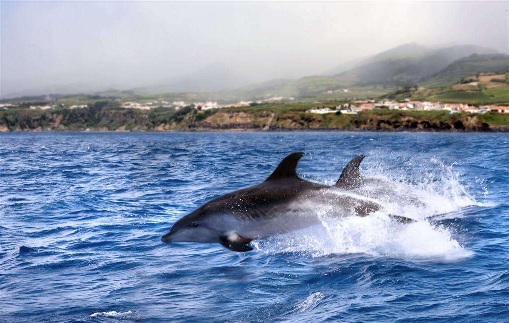 Azorské ostrovy Sao Miguel, Terceira, Pico, Faial - 7 Popup navigation