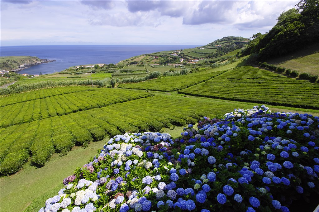 Azorské ostrovy Sao Miguel, Terceira, Pico, Faial - 8 Popup navigation